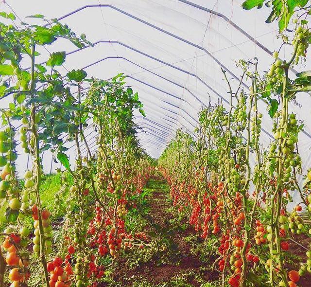 industrialnyy_park_ovoshchnaya_dolina05.jpg