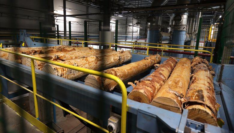 Индустриальный парк по переработке леса может появиться на Вологодчине